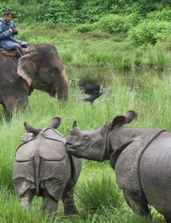 pimage_sighting-of-rhinos-during-elephant-ride-768x1000